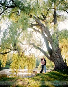 Weeping willow tree engagement. Great idea I'm going to do this one day :)