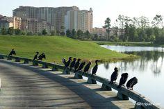 Waldorf Astoria Orlando (Florida) - Hotel Reviews - TripAdvisor