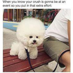 """""""Quando vc sabe que o crush estará na hj vc capricha mais!"""". Desde que a @helenabordon me mandou isso não consigo parar de rir quando olho! Kkkkk migueeeees quem vai se arrumar para ver o crush hj?  by micarocha"""