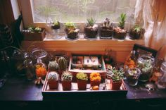 window sill filled with insects, moss, lichen, cacti ,succulents and more little inspirations