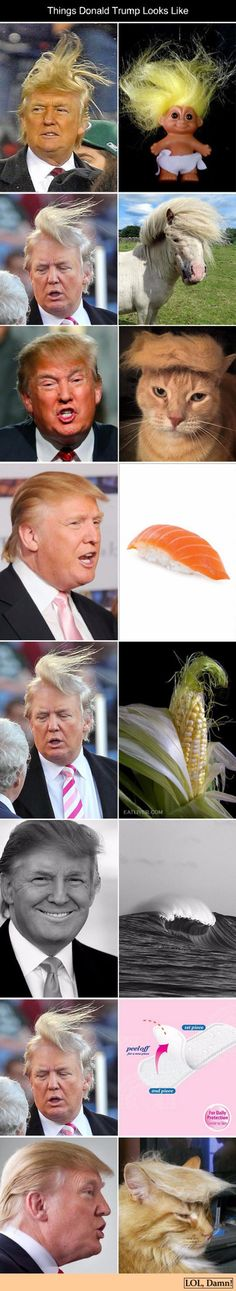 Donald Trump Look Alikes http://ibeebz.com