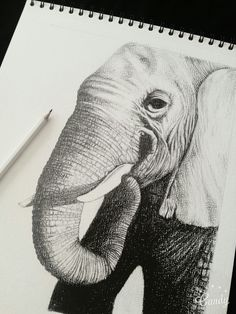 #drawing #art #elephant #black #white