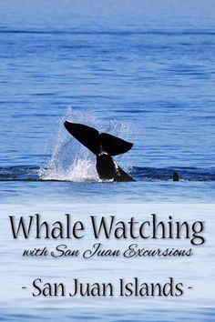 What to expect on a whale watching trip with San Juan Excursions in Friday Harbor, Washington. Check this one off your bucket list!   tipsforfamilytrips.com