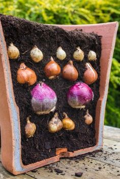 Plant a 'bulb lasagne' for a bold display in Spring - Perrywood