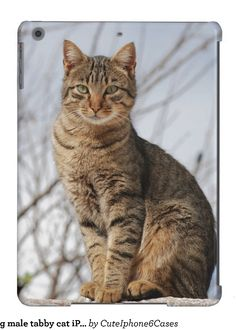 Cute young male tabby cat iPad Air Case Samsung Galaxy S5/ S6/ S7/ Note 4/ iPhone 6/ 6S Plus/ SE/ 5 / 5S/ 5C/ iPad Mini/ Air, Nexus, iPod Touch/ Motorola Razr  Case Cover designs ready be purchased or customized, check out http://www.zazzle.com/cuteiphone6cases/gifts?cg=196030690779241337&rf=238478323816001889&pg=1