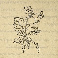 Printable Graphic Flowers with Ribbon Download Elegant Antique Image Digital Vintage Clip Art. Vintage high resolution digital graphic for printing, transfers, and much more. Great for etsy products. This graphic is high quality, high resolution at 8½ x 11 inches. Transparent background version included with all images.