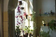 plantses <3