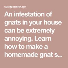 An infestation of gnats in your house can be extremely annoying. Learn how to make a homemade gnat spray to eliminate these pests for good. Veg Garden, Garden Soil, Gardening, Getting Rid Of Nats, Gnat Spray, Insect Repellent Plants, How To Get Rid Of Gnats, Mosquito Spray, Liquid Castile Soap