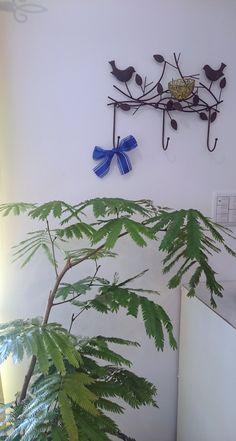Fern Plant, Ferns, Plants, Fern, Plant, Planets