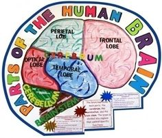 Make a Science Fair Project | Poster Ideas - Human Brain | Biology Project for Kids