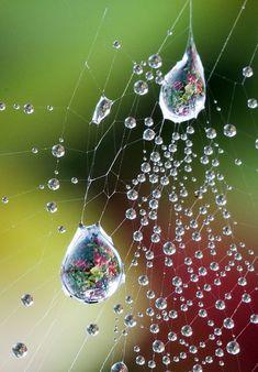 eau 45