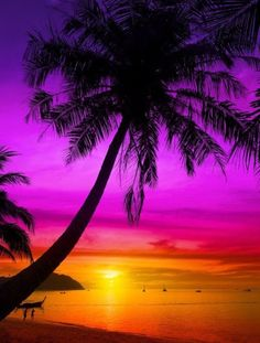 Palm tree silhouette on tropical beach at sunset...... Here you relax with these backyard landscaping ideas and landscape design. #Relax more with this #free #music with #BinauralBeats that can #heal you: #landscaping #LandscapingIdeas #landscapeDesign