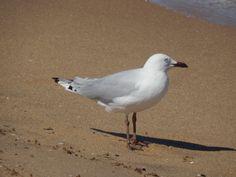 Man, seagull's eyes are creepy.