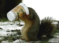 squirrel + coffee = murderous combination