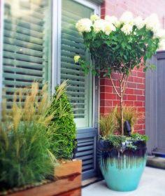 amber freda nyc home garden design blog