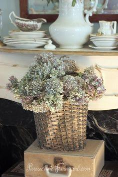 I LOVE hydrangeas! How to dry them.