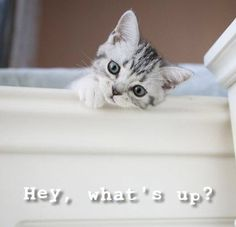 Too Cute !! - 4th December 2015 - We Love Cats and Kittens