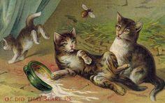 Antique-Cat-Postcard-Artist-Drawn-Scared-Kittens-Unused-German-DB-Unused-EMB
