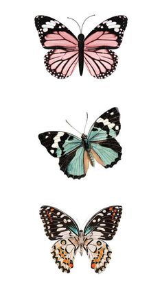 VSCO - Reesebrewer - Images | Butterfly Art, Butterfly