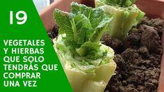 19 vegetales y hierbas que solo tendrás que comprar una vez copia
