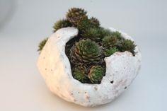 free form pot
