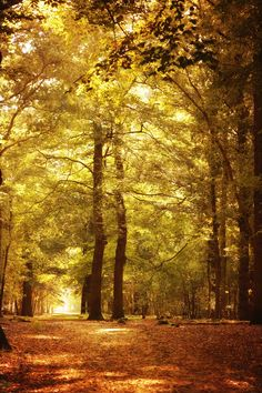 Autumn in the forest - A scene on a beautiful autumn day in the forest with…