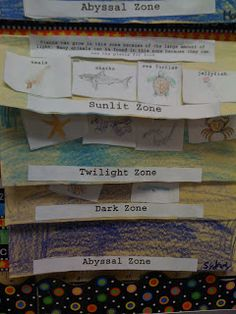Bishop's Blackboard: A First Grade Blog: Ocean Zones Foldable