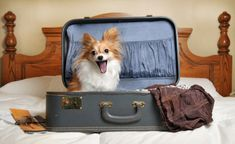 How One Hotel Is Helping To Save Dogs Lives In A Very Adorable Way Pet Friendly
