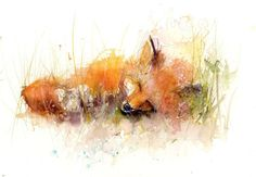 JEN BUCKLEY Original Sleeping Fox Watercolour PAINTING signed large A3