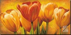 Bouquet of Orange Tulips Stretched Canvas Print by David Pedersen at Art.com