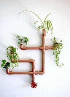 plants & more