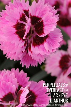 44 top spring 2018 images edible garden bloom edible plants rh pinterest com