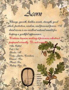 Book of Shadows: Herb Grimoire - Acorn by CoNiGMa on DeviantArt