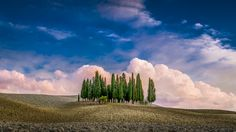 Cypress Hill - The beautiful cypress hill of Val d'Orcia