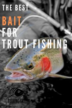 Want to know what the best trout bait is? There's many that claim to be the best. Here's a list of what I've found to be the BEST BAIT FOR TROUT Trout Fishing Tips, Salmon Fishing, Fishing Lures, Fly Fishing, Fishing Tricks, Walleye Fishing, Fishing Rods, Fishing Tackle, Best Trout Bait