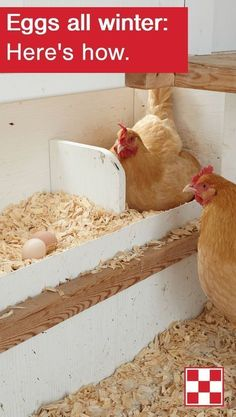As days get shorter, hens naturally produce fewer eggs. This is because they need a minimum of 16 hours of light – either natural, artificial or a combination of the two – to sustain strong production. Click to learn how to help your hens keep laying through the fall and winter.