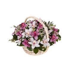 https://www.florisis.ro/en/basket-arrangements/51-basket-with-19-cups-of-cymbidium-orchids.html
