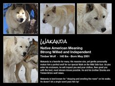 Colorado Wolf and Wildlife Center - Pack
