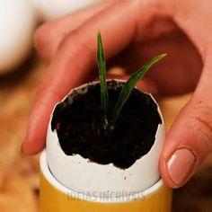 Regrow Vegetables, Planting Vegetables, Growing Veggies, Growing Plants, Vegetable Garden Design, Buy Seeds, Garden Seeds, Herb Seeds, Seeds Online