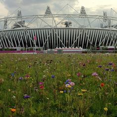 Wildflowers grow outside Olympic Stadium a week before the games begin. #NBCOlympics #London #London2012