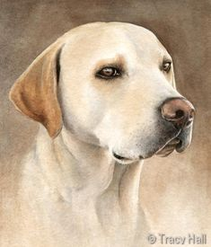 labrador pet portrait in watercolour by Tracy Hall