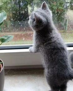 Funny Cute Cats, Cute Kitten Gif, Cute Cats And Kittens, Cute Funny Animals, Kittens Cutest, Cute Baby Bunnies, Cute Little Animals, Crazy Cats, Pet Birds