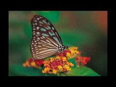 """Abraham Hicks - Preparing your """"Ideal Work Situation"""" Grid - YouTube"""