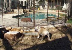 Pet Fence Photos