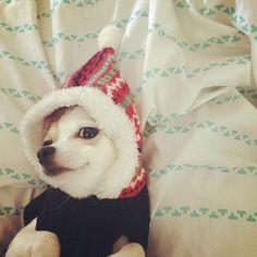 #Smart #dogie