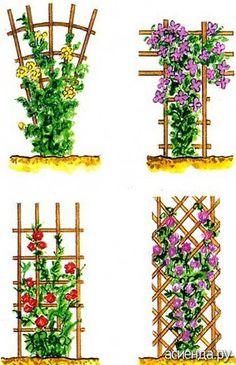 Лианы. Клематисы. Применение в саду.: Дневник пользователя Butyzenok