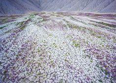 Flores (Foto: Guy Tal / reprodução)