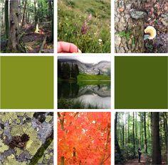 Octobre sur Instagram | Terraroom -> greenlife, couleurs d'automne, récapitulatif du mois, photos Instagram, automne 2016, Riviera, région du Léman, explorer la Suisse