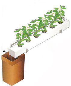 hidroponia-cultivo-sem-substrato