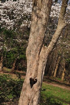 Hollowed Heart... Frm Marotta's bd: Trees